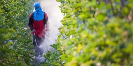 Mettons à bas le modèle de Monsanto