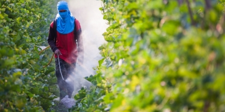 End the Monsanto Model