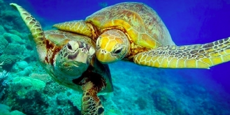 World Leaders: Protect 30% of our Oceans