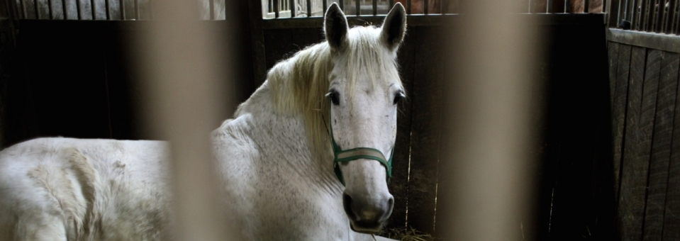 Stop the pregnant horse blood trade!