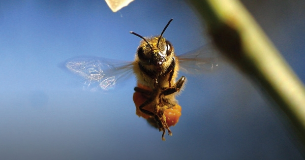 Bees are dying fast, but this global petition to all world leaders could help save them. Add your name - let's get to 5 million!