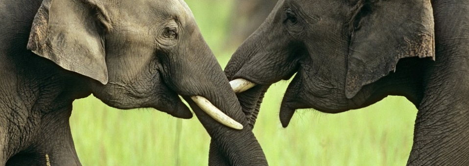 Europe:<br> End the ivory trade