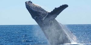 24620_whales_3_300x150.jpg