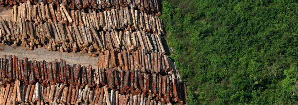 Impeça que a Amazônia vire um deserto!