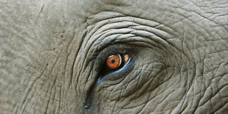 End Europe's ivory trade