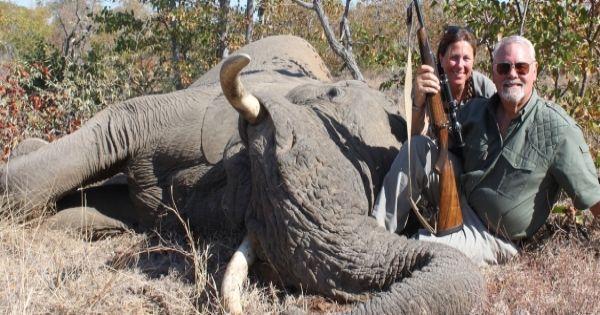 Avaaz Stop Trumps Jacht Op Olifanten