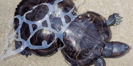 Opriți epidemia plasticului