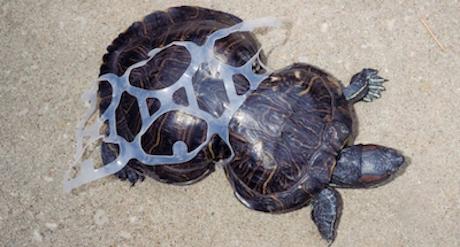 Acabemos con la plaga de plástico