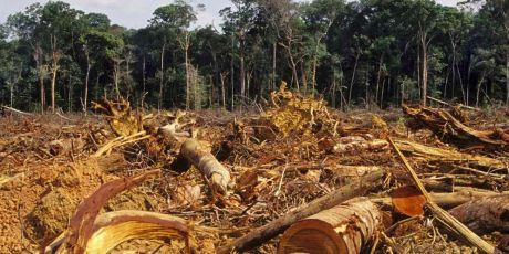 Acabe com o ataque secreto à Amazônia