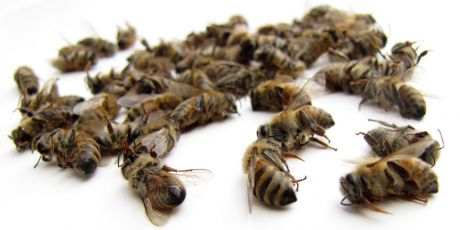 Junte-se antes que a última abelha morra