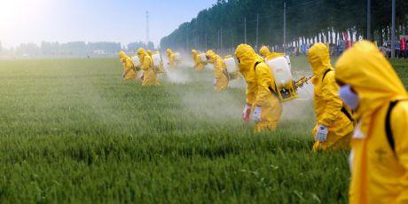 Avaaz contre Monsanto : l'affaire se terminera devant les tribunaux 27571_mass_spray_1_460x230