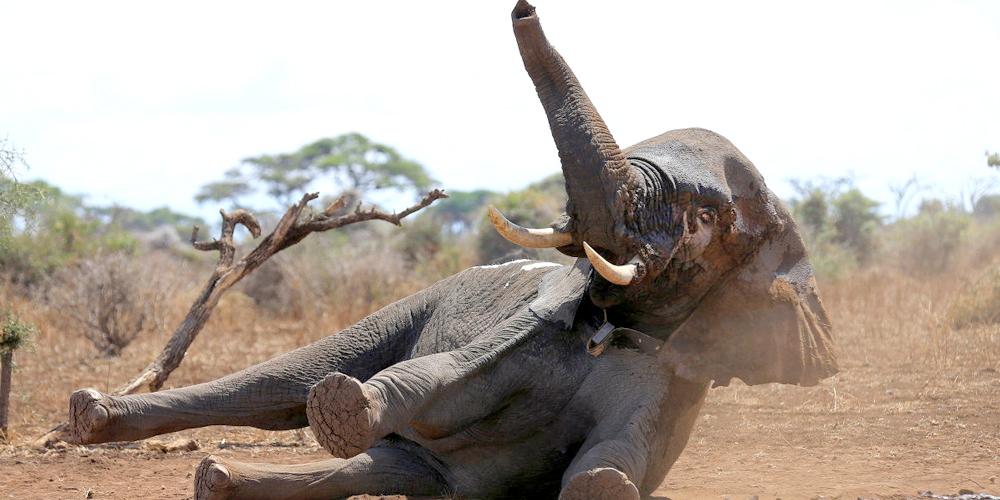 Help elephants fight back against Trump!