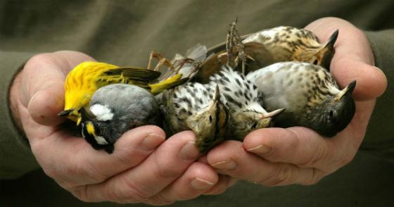 Sauvons les oiseaux et toutes les espèces