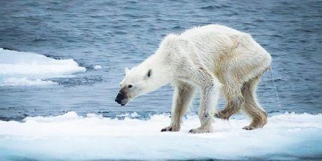 Koniec z węglem, nie planetą!
