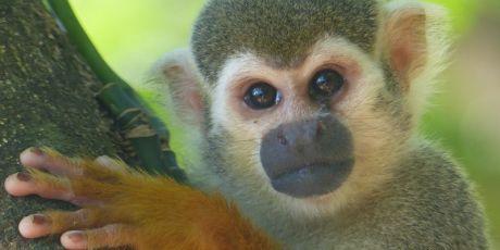Sauvons la forêt de Guyane, NON à la montagne d'or!