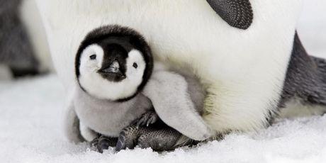 Save Antarctica's ocean wilderness!