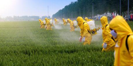 Monsanto eine Botschaft senden