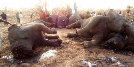 Unsere beste Chance die Elefanten zu retten
