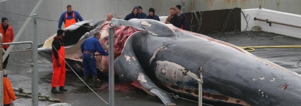 Detengan al carnicero de ballenas