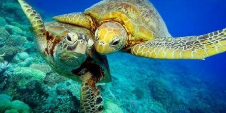 Rettungsplan für die Natur