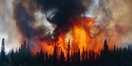 對抗氣候危機的16個月計畫