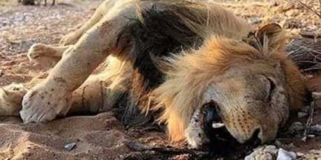 Salve o Rei Leão e o Círculo da Vida!