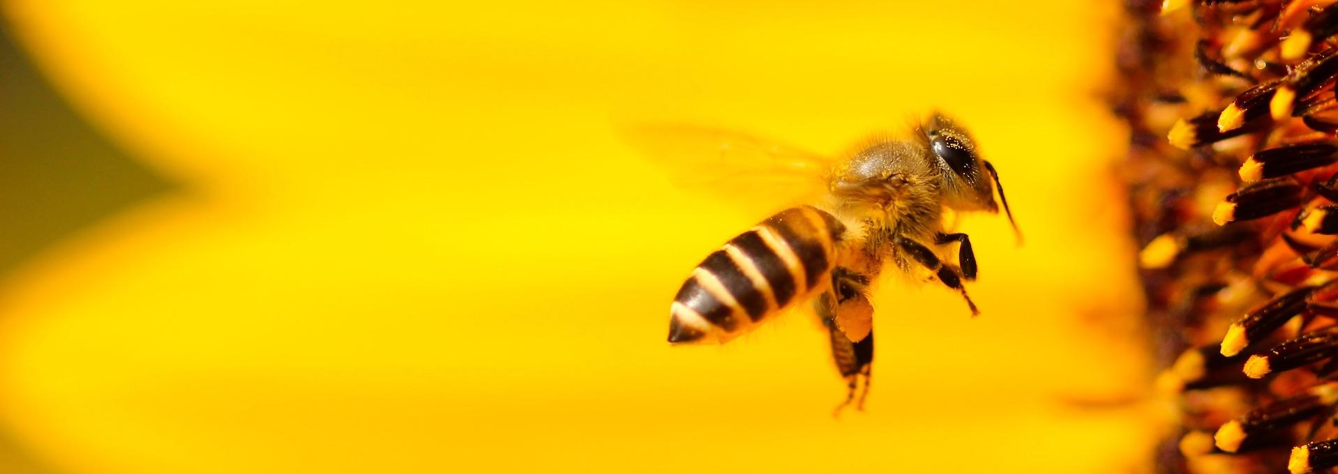 Het finale gevecht voor de bijen!
