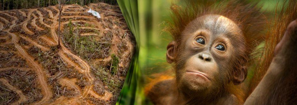 EU: Waldzerstörende Produkte verbieten