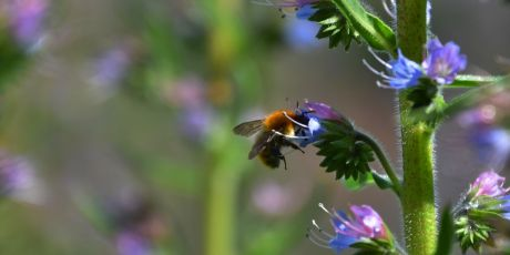 Join the final fight to save the bees