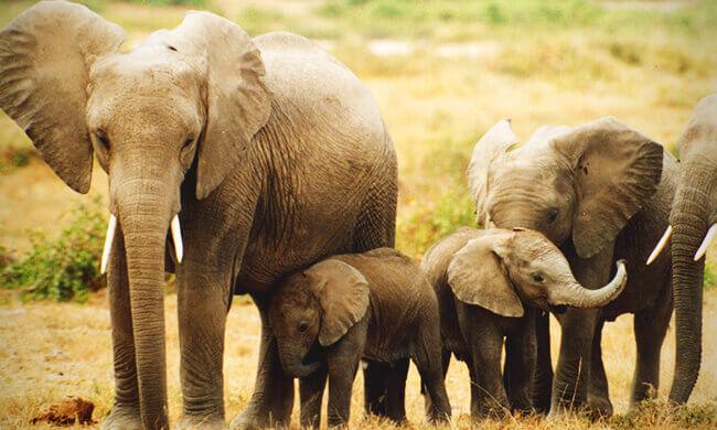 Elefantenmorde stoppen