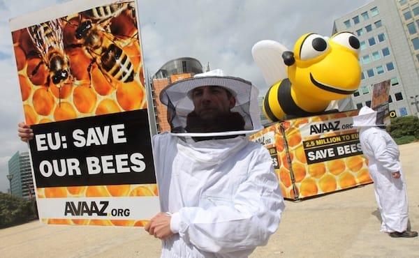 Pesticides tueurs d'abeilles : la mobilisation par pétition a porté ses fruits (communiqué de  Avaaz) European_bees_find_pesticide_relief_rsz
