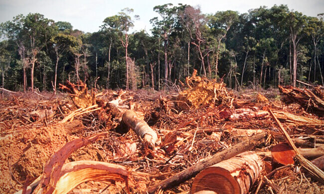 Stopping the Amazon Chainsaws