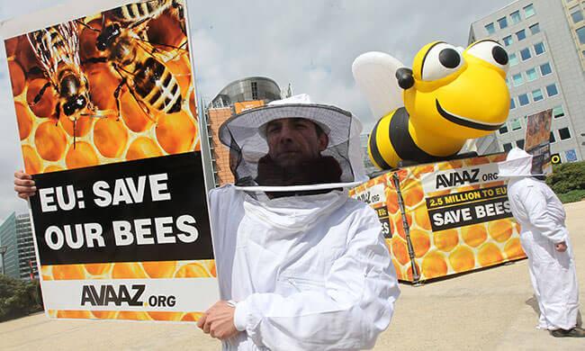 Ein Erfolg für Bienen in Europa!