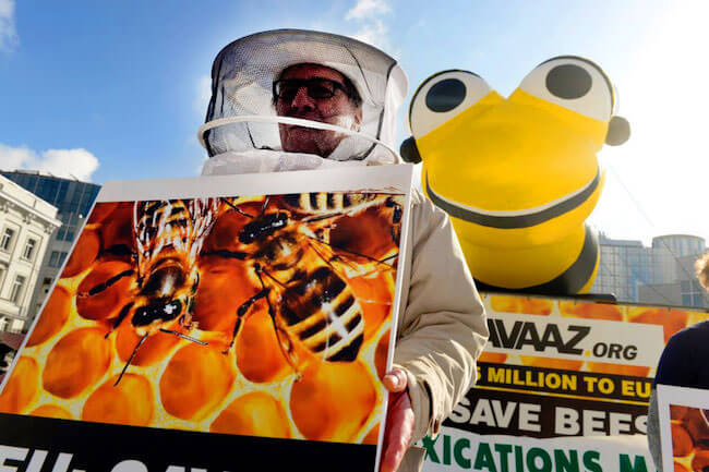Saving Bees from killer pesticides