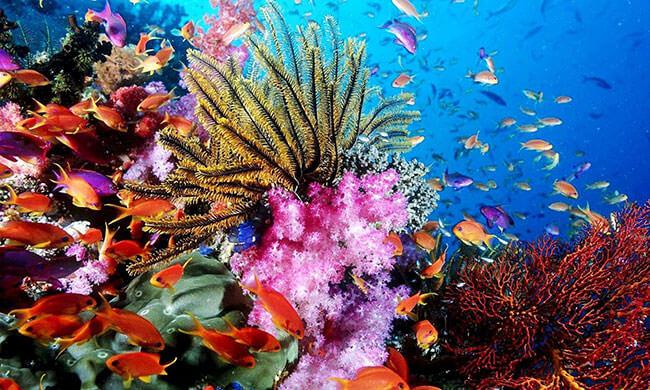 Das Korallenmeer schützen