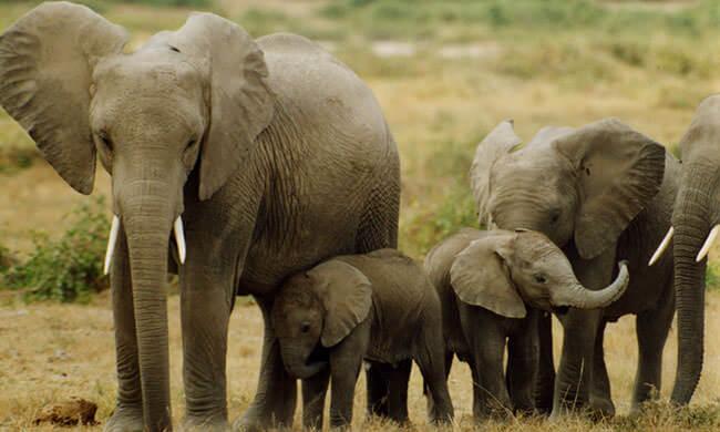 Bedrohte Elefanten schützen