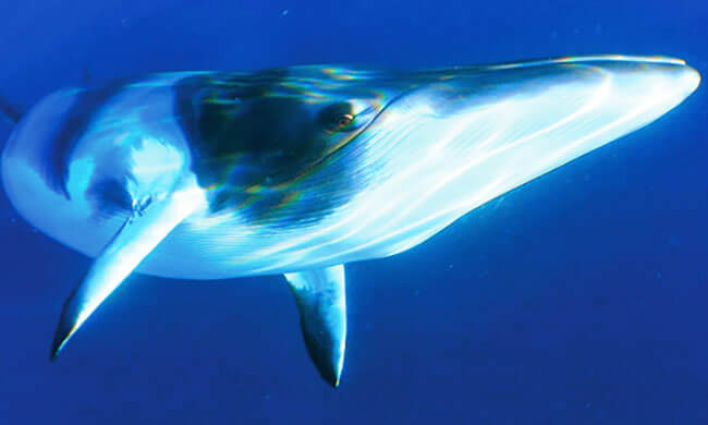 Stopping the fin whale slaughter