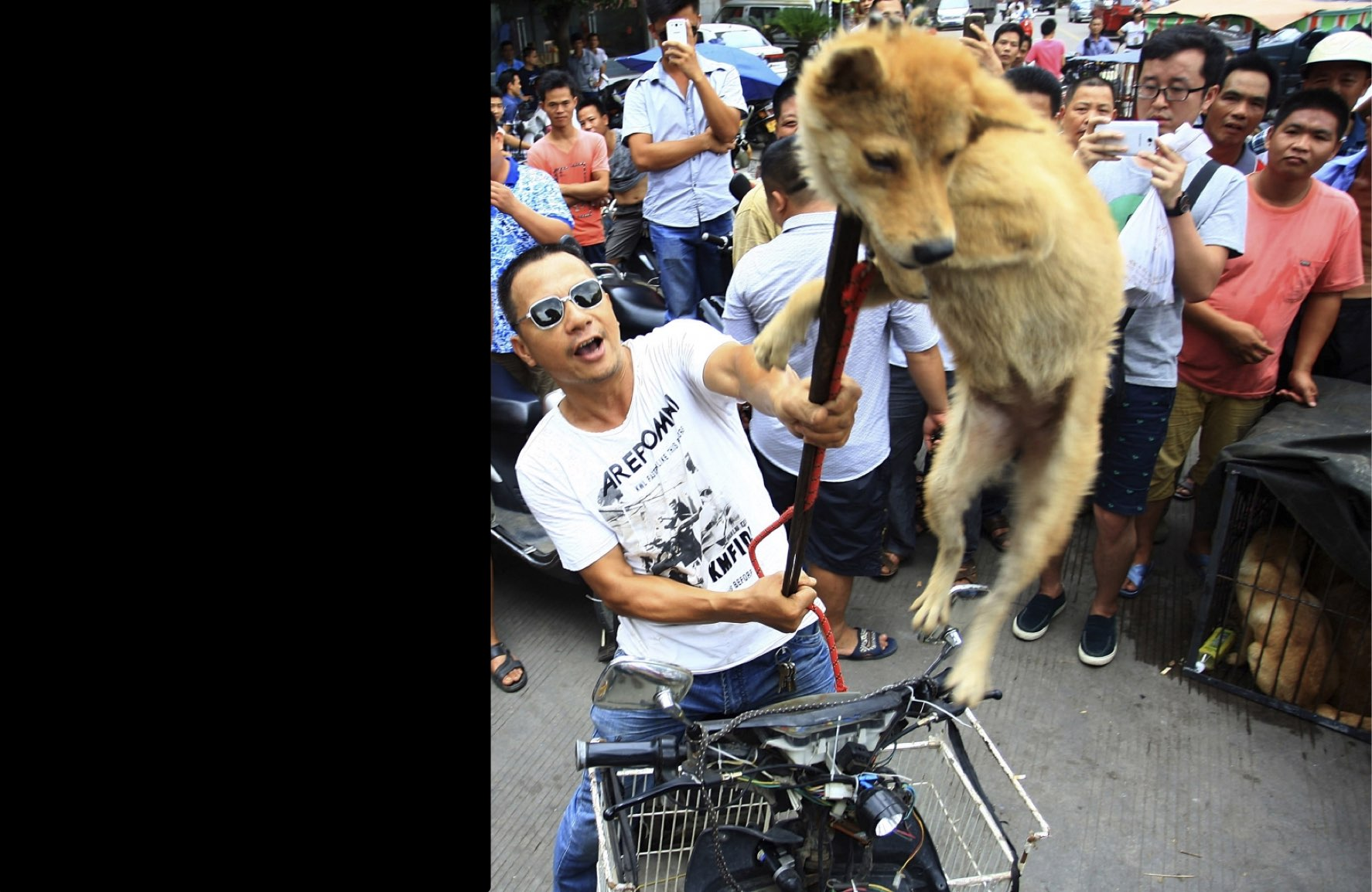 Shut down the Yulin dog meat festival! - OnePlus Forums - photo#45